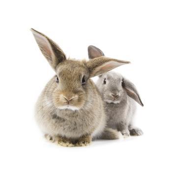 On soigne votre lapin à la clinique vétérinaire Lafayette